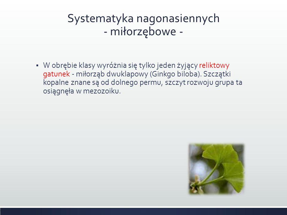 Systematyka nagonasiennych - miłorzębowe -