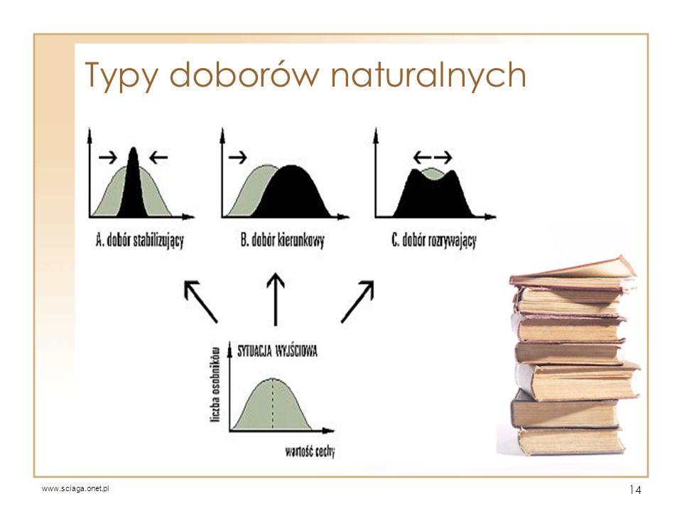 Typy doborów naturalnych