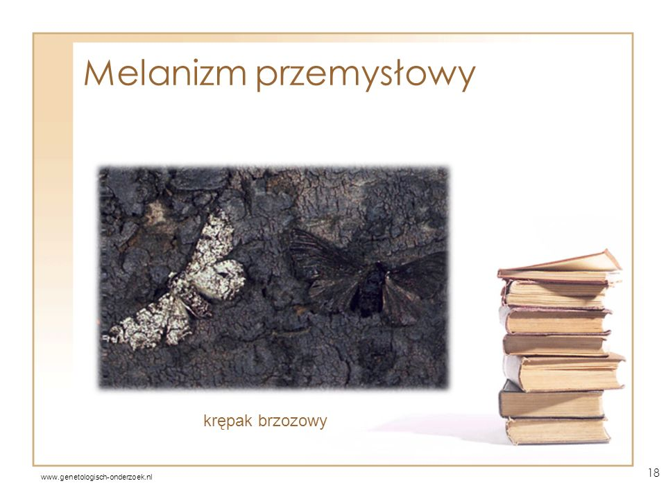 Melanizm przemysłowy krępak brzozowy www.genetologisch-onderzoek.nl