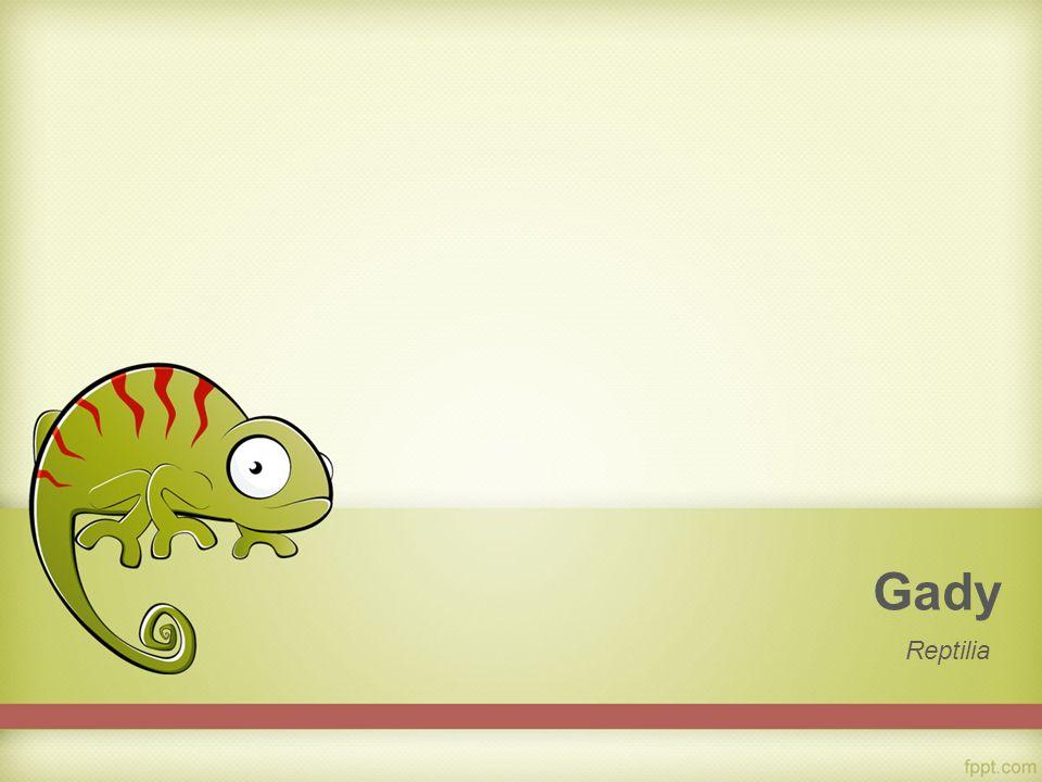 Gady Reptilia