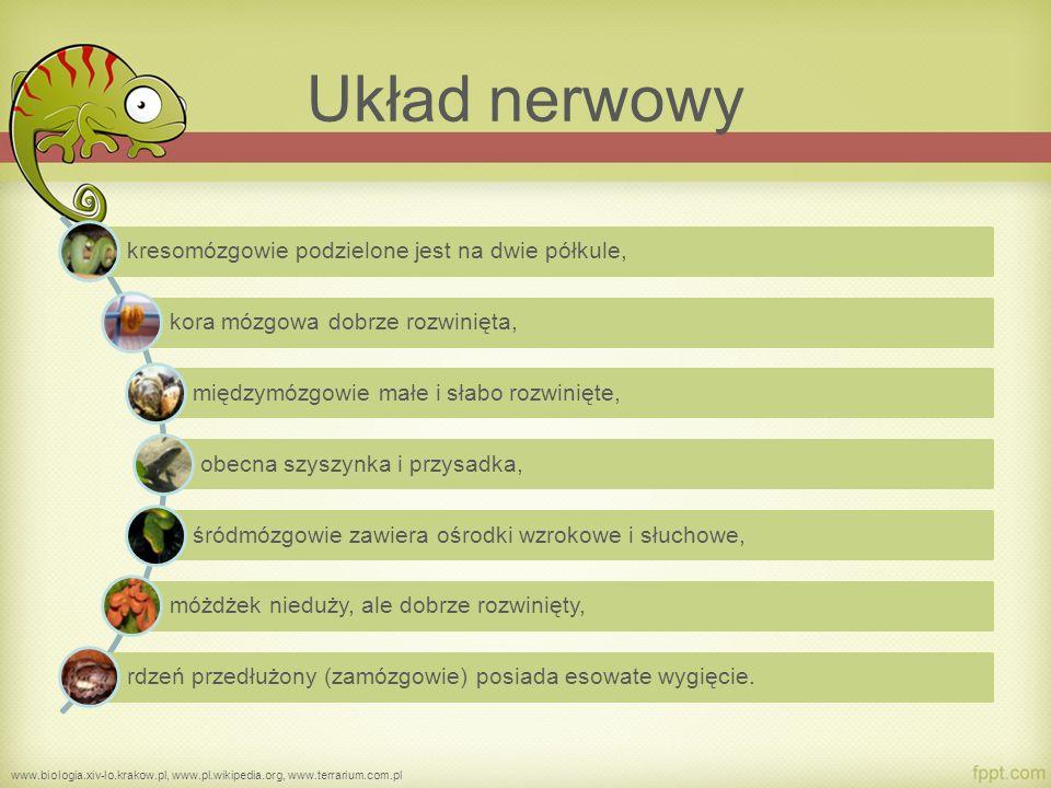 Układ nerwowy kresomózgowie podzielone jest na dwie półkule,