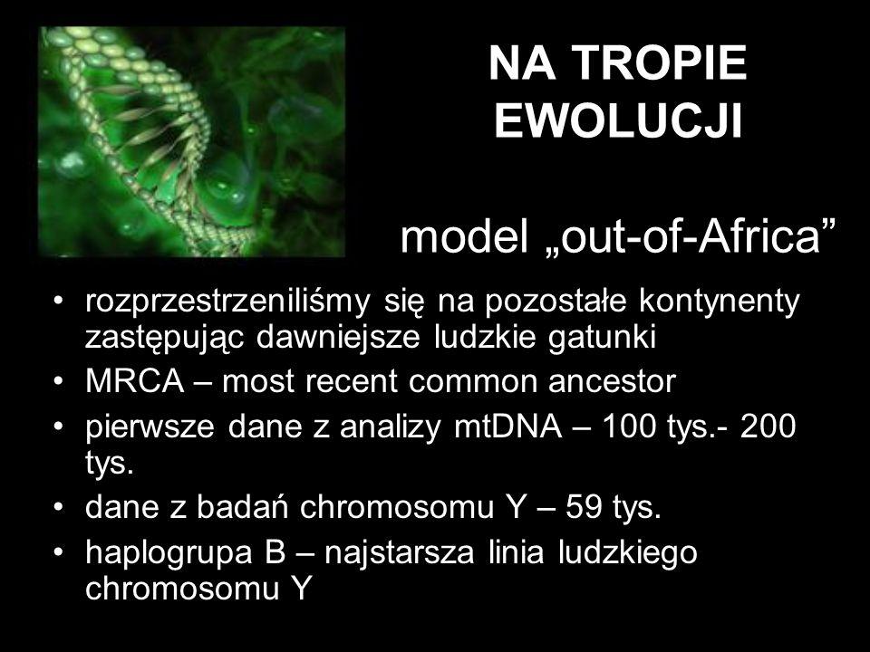 "NA TROPIE EWOLUCJI model ""out-of-Africa"