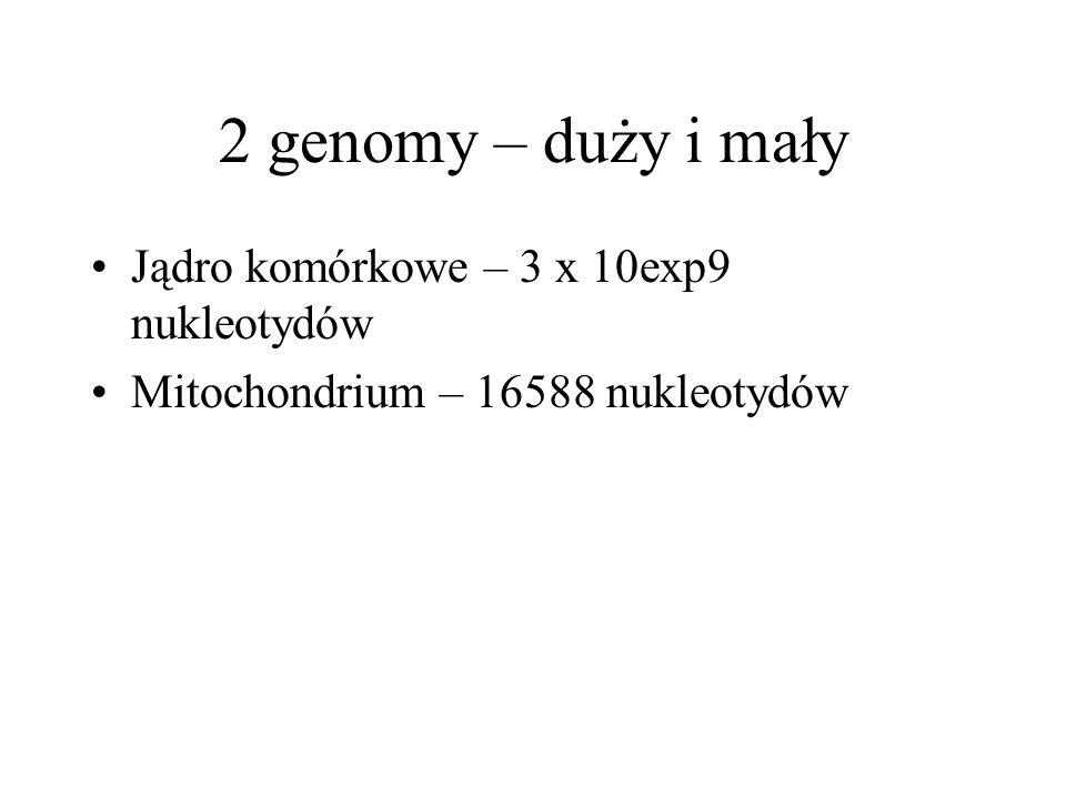 2 genomy – duży i mały Jądro komórkowe – 3 x 10exp9 nukleotydów