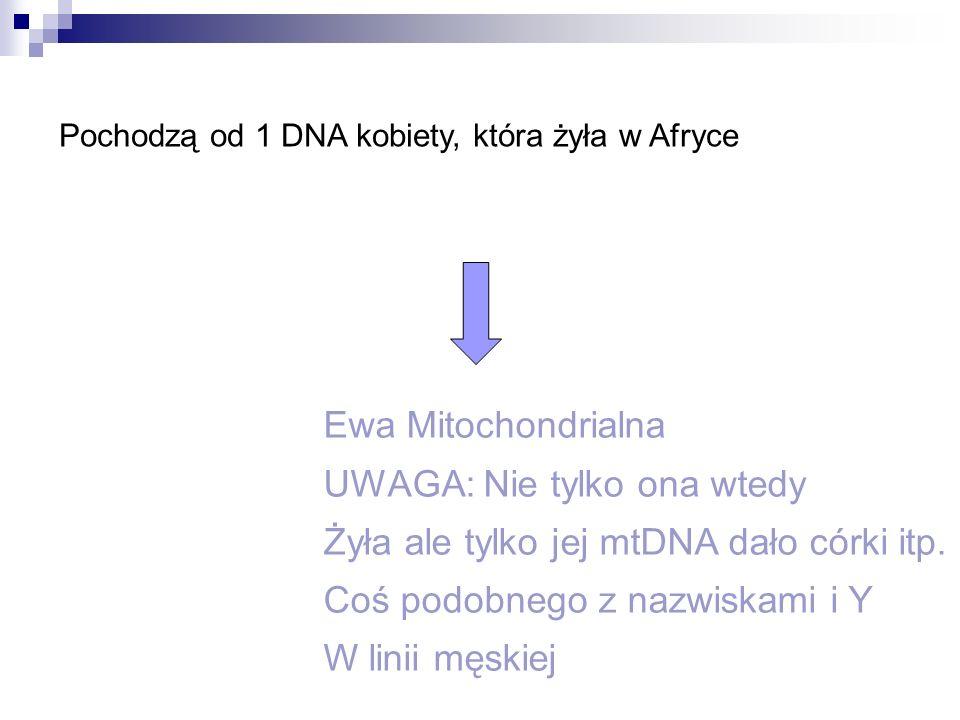 UWAGA: Nie tylko ona wtedy Żyła ale tylko jej mtDNA dało córki itp.