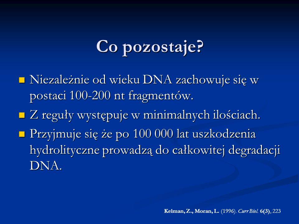 Co pozostaje Niezależnie od wieku DNA zachowuje się w postaci 100-200 nt fragmentów. Z reguły występuje w minimalnych ilościach.