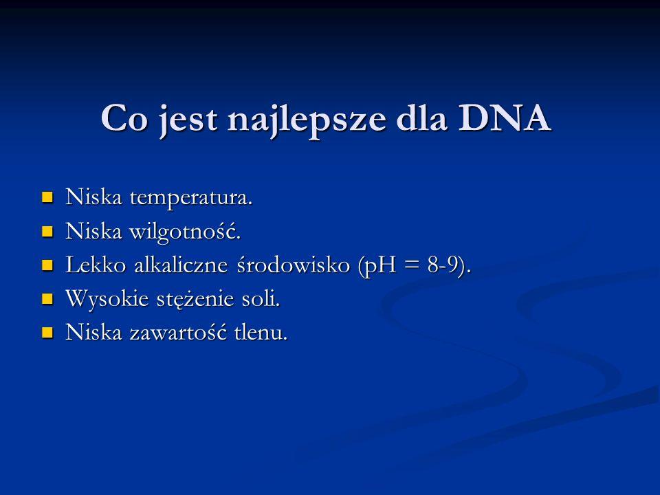 Co jest najlepsze dla DNA
