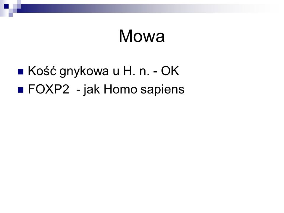 Mowa Kość gnykowa u H. n. - OK FOXP2 - jak Homo sapiens