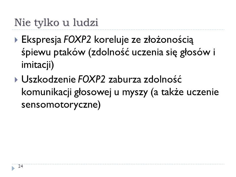 Nie tylko u ludzi Ekspresja FOXP2 koreluje ze złożonością śpiewu ptaków (zdolność uczenia się głosów i imitacji)