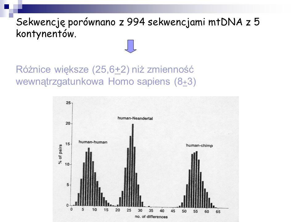 Sekwencję porównano z 994 sekwencjami mtDNA z 5 kontynentów.