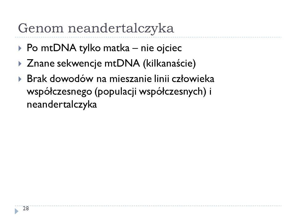 Genom neandertalczyka