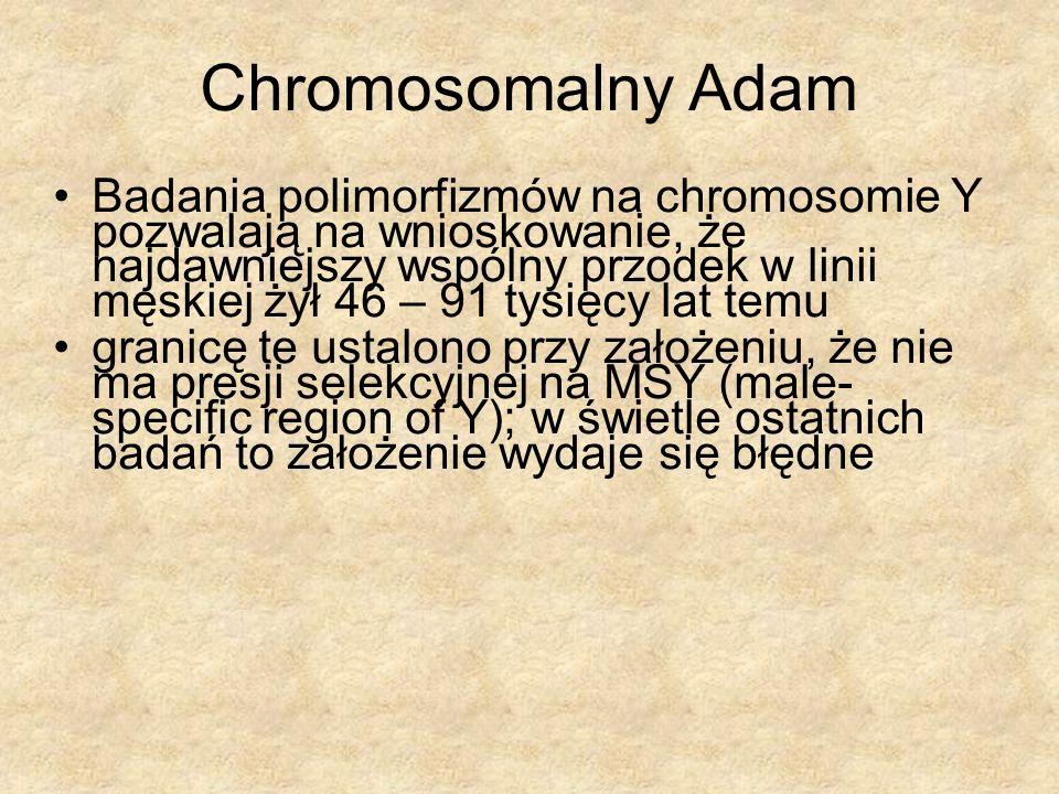 Chromosomalny Adam