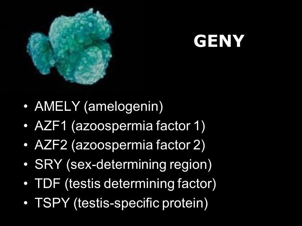 GENY AMELY (amelogenin) AZF1 (azoospermia factor 1)