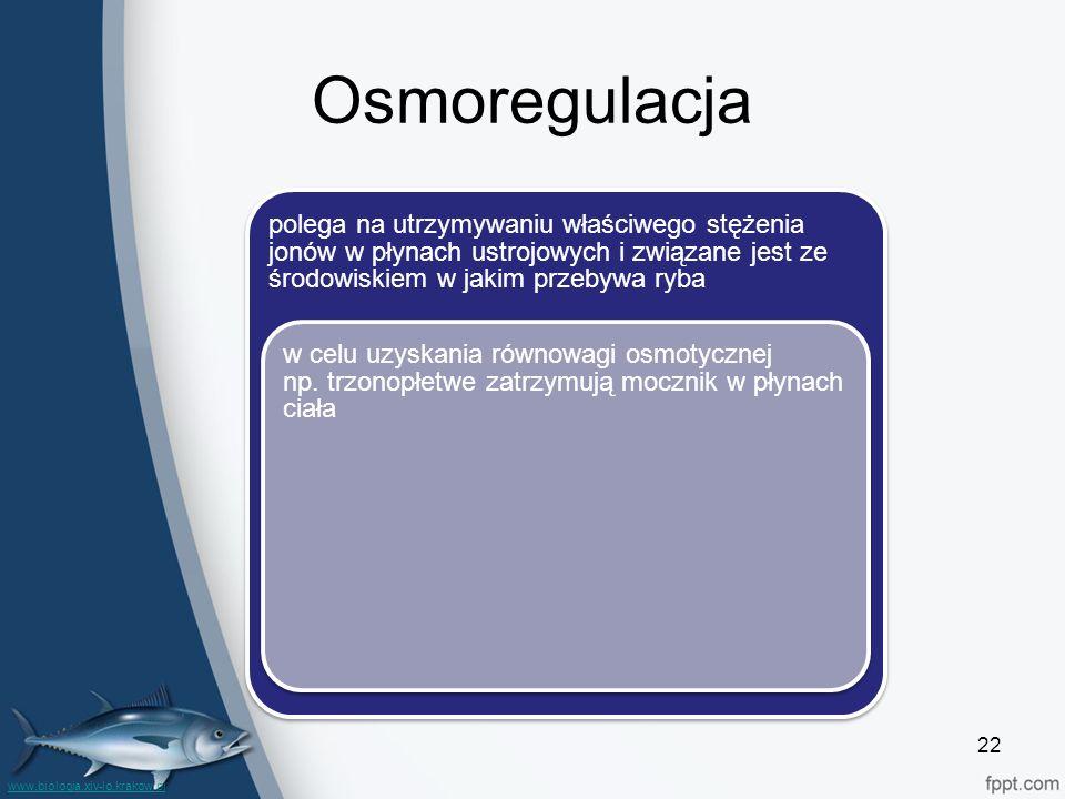 Osmoregulacja polega na utrzymywaniu właściwego stężenia jonów w płynach ustrojowych i związane jest ze środowiskiem w jakim przebywa ryba.