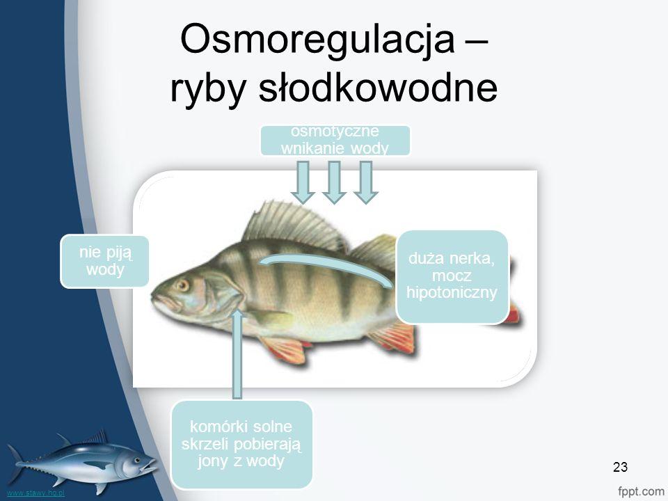 Osmoregulacja – ryby słodkowodne