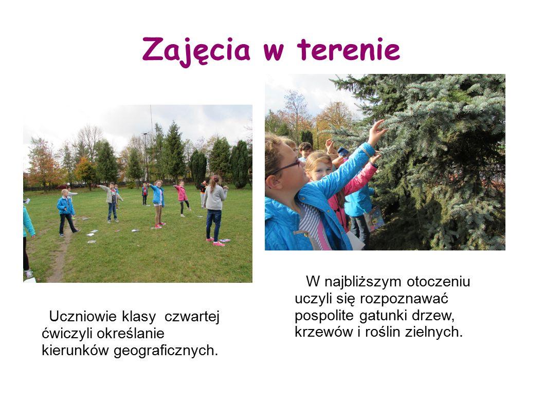 Zajęcia w terenie W najbliższym otoczeniu uczyli się rozpoznawać pospolite gatunki drzew, krzewów i roślin zielnych.