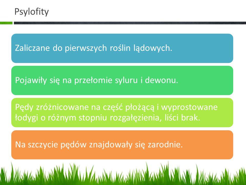 Psylofity Zaliczane do pierwszych roślin lądowych.