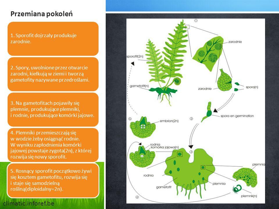 Przemiana pokoleń climatic.inforef.be