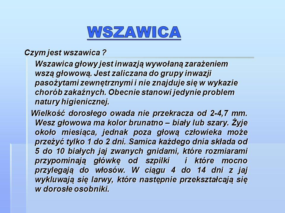 Wszawica