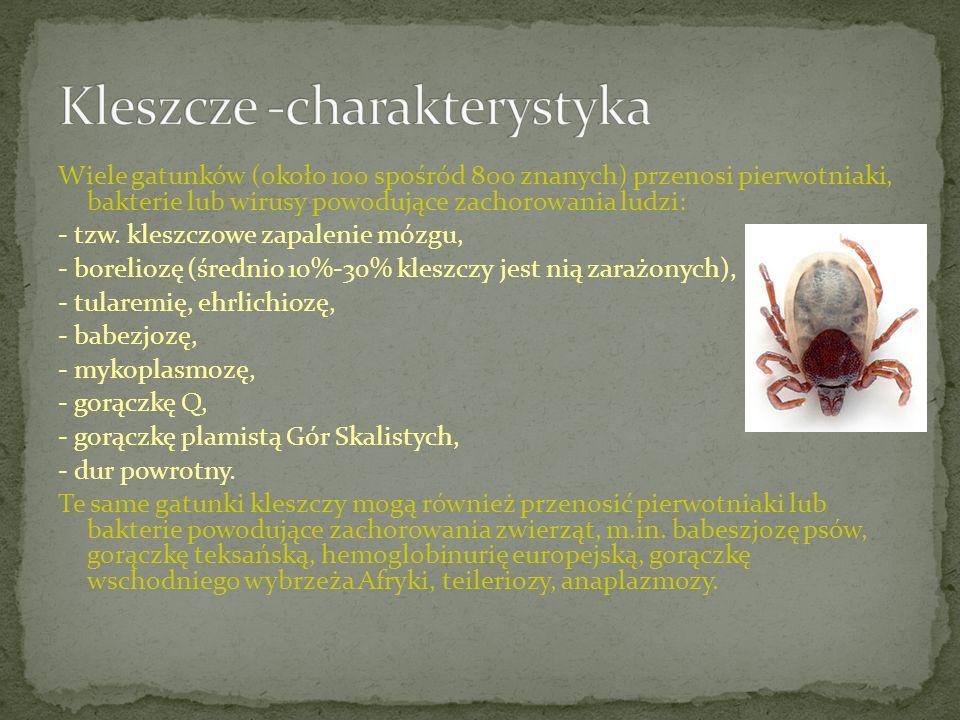 Kleszcze -charakterystyka