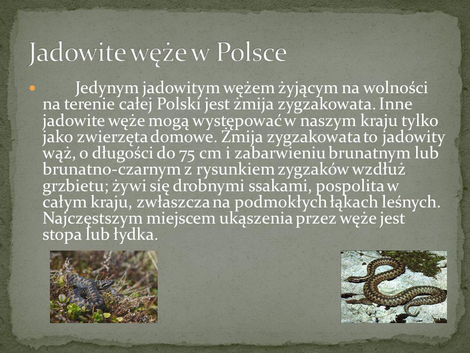 Jadowite węże w Polsce