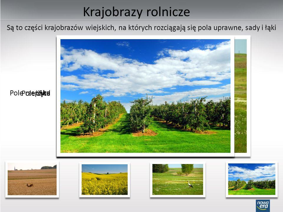 Krajobrazy rolnicze Są to części krajobrazów wiejskich, na których rozciągają się pola uprawne, sady i łąki.
