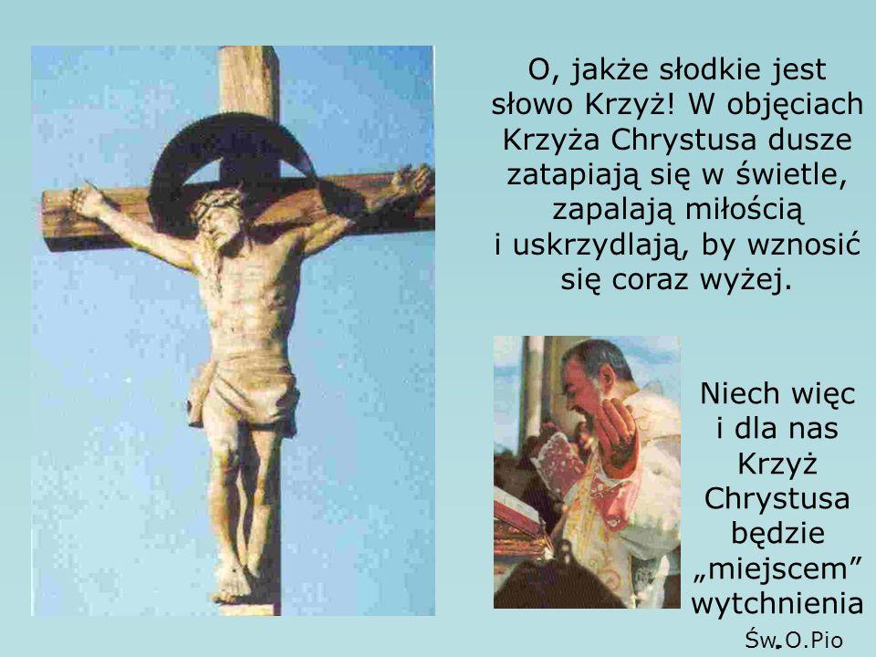 """Niech więc i dla nas Krzyż Chrystusa będzie """"miejscem wytchnienia."""