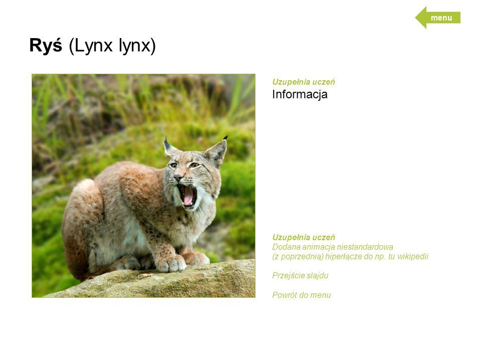 Ryś (Lynx lynx) Informacja menu Uzupełnia uczeń Uzupełnia uczeń