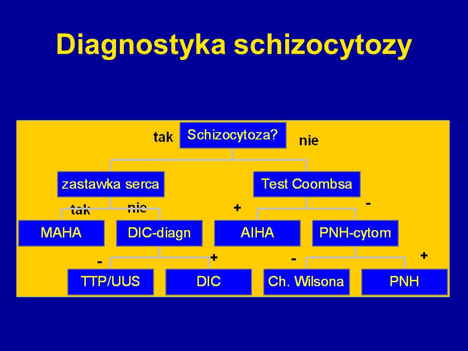Diagnostyka schizocytozy