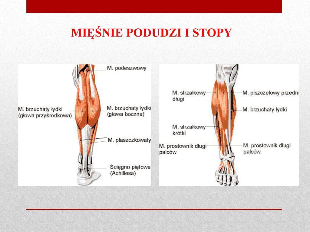 Stopy – podstawowe wiadomości z zakresu fizjoterapii i podologii - ppt  pobierz