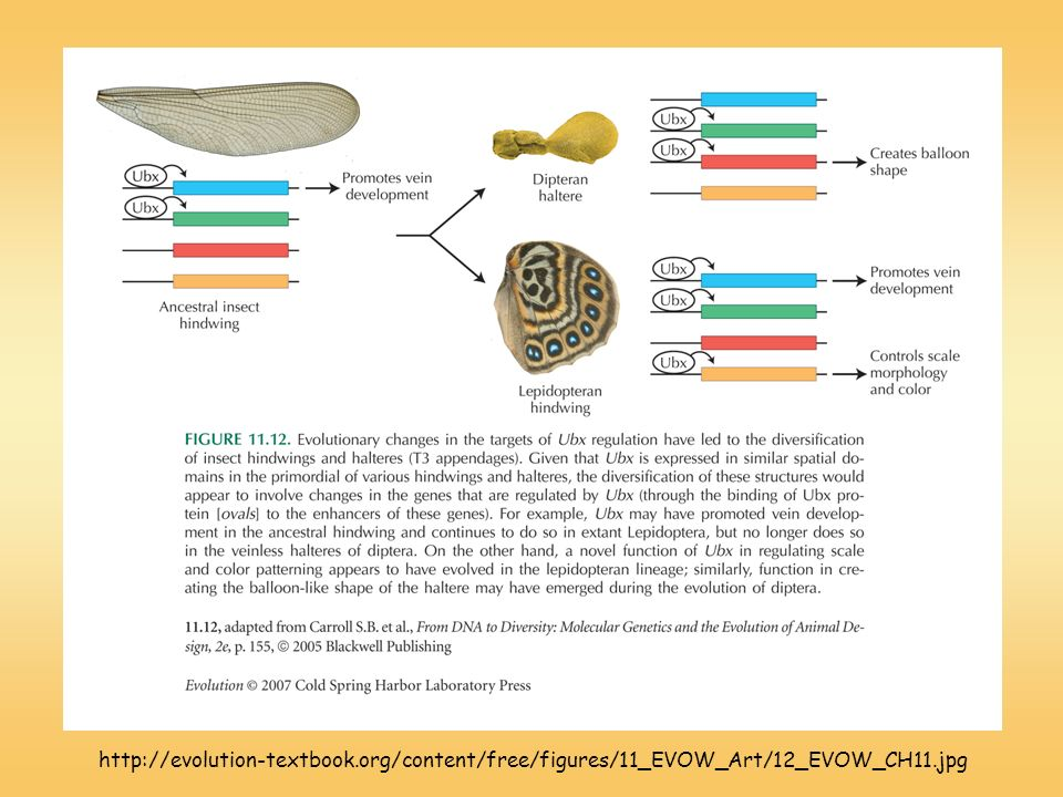 http://evolution-textbook.org/content/free/figures/11_EVOW_Art/12_EVOW_CH11.jpg