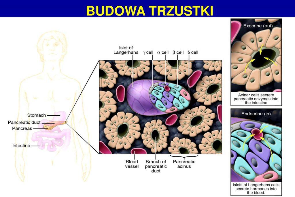 Kierownik Kliniki Prof Dr Hab Med Slawomir Nazarewski Ppt Pobierz