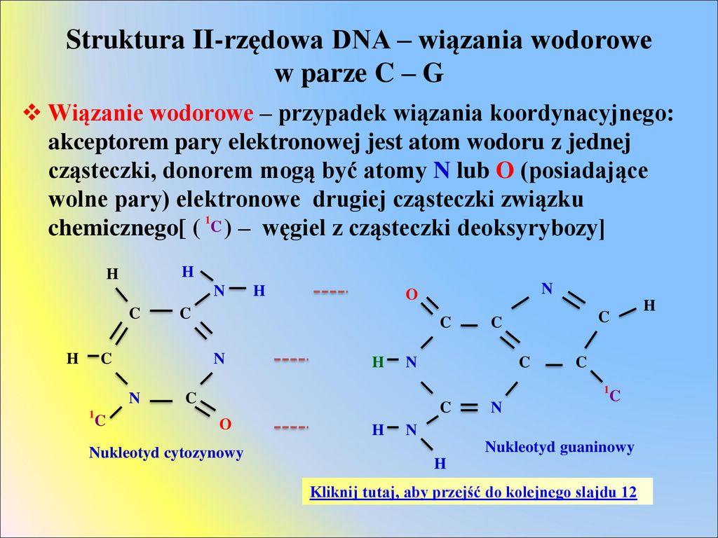 Kwasy Nukleinowe Elementy Skladowe Kwasow Nukleinowych Ppt Pobierz