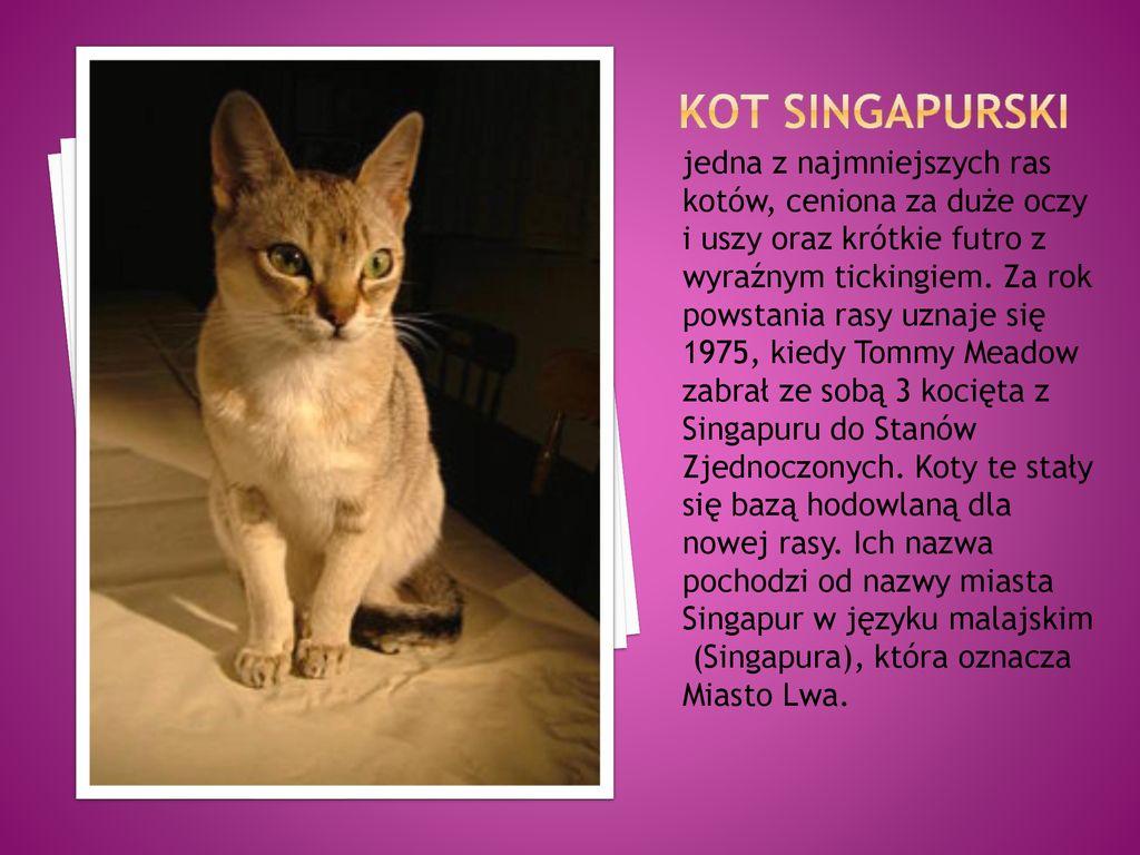 Kilka Ras Kotów Z Całego świata Ppt Pobierz