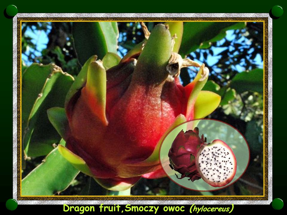 Dragon fruit,Smoczy owoc (hylocereus)