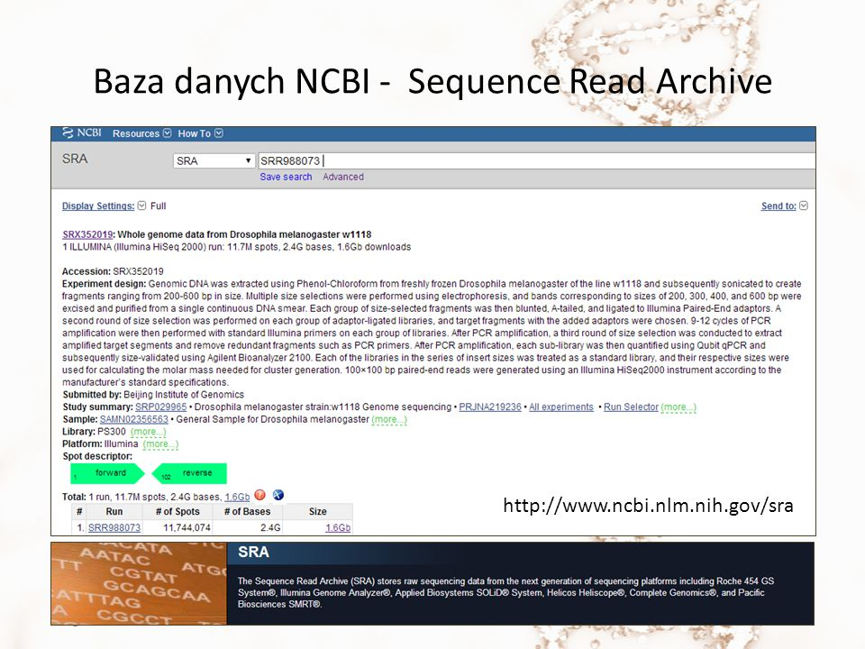 Baza danych NCBI - Sequence Read Archive