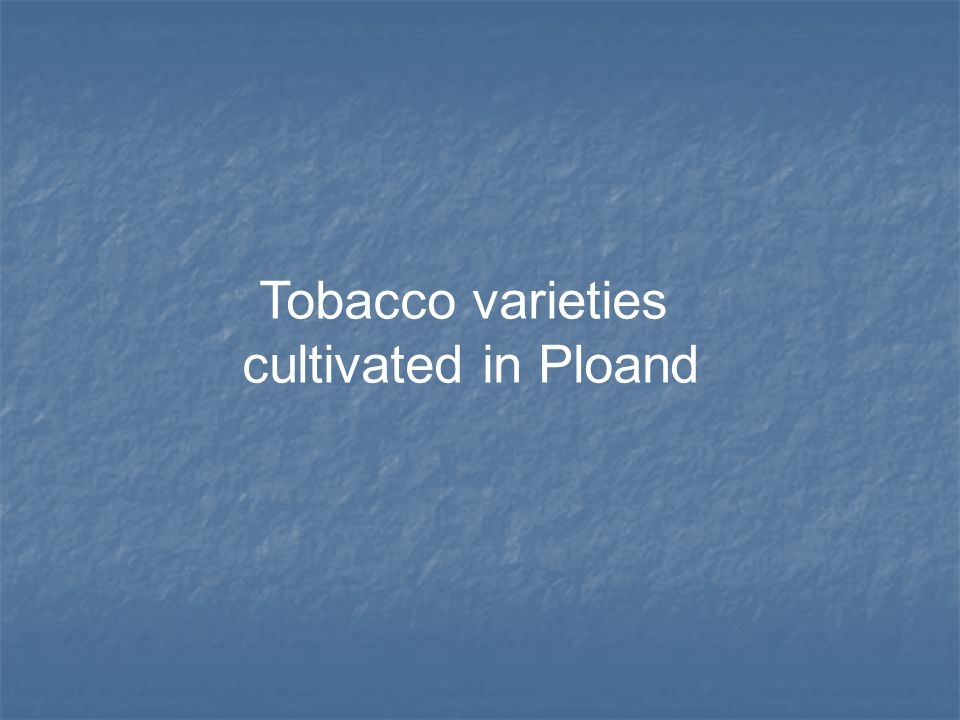 Tobacco varieties cultivated in Ploand