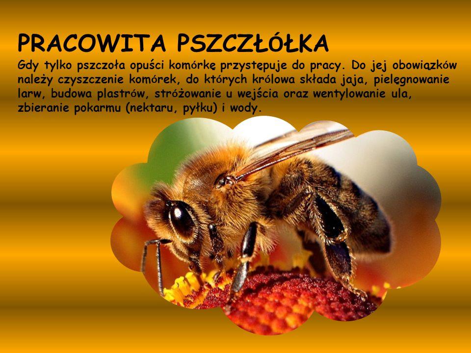 Pszczoła Miodna Ppt Pobierz