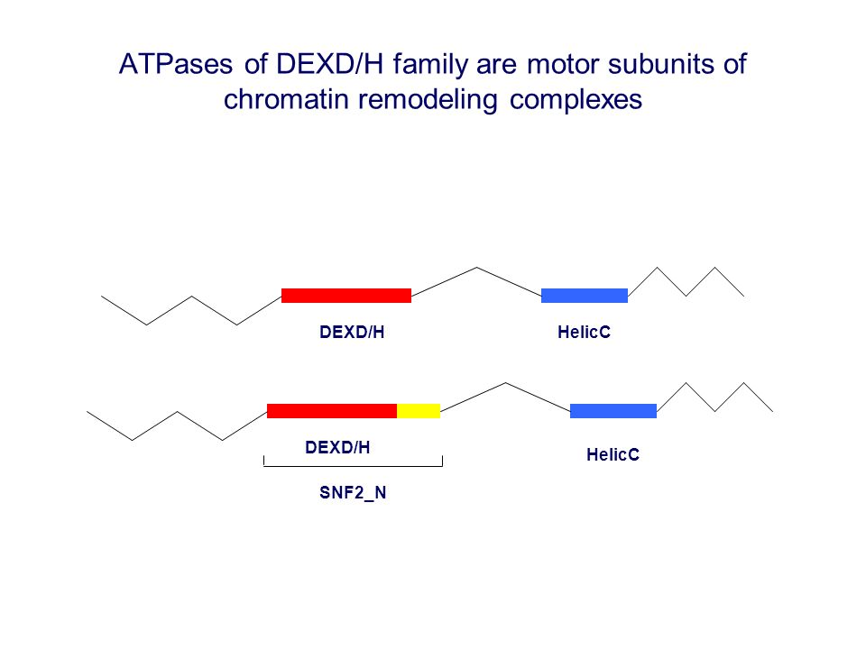ATPases of DEXD/H family are motor subunits of chromatin remodeling complexes