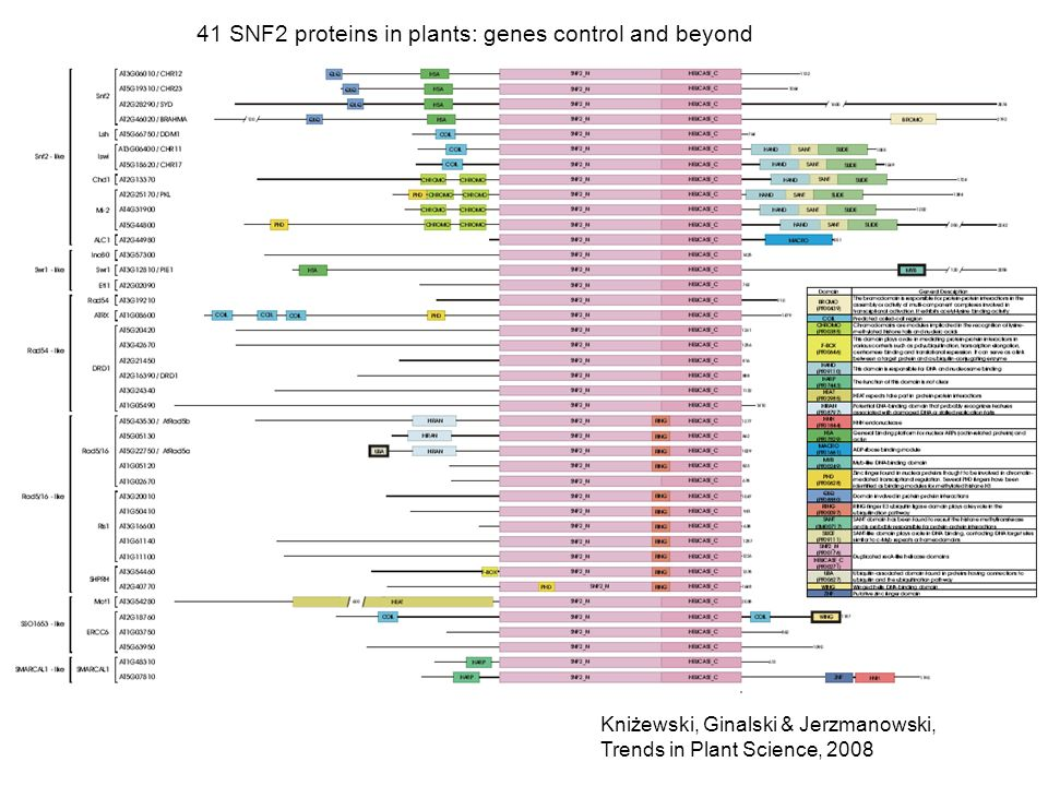 41 SNF2 proteins in plants: genes control and beyond