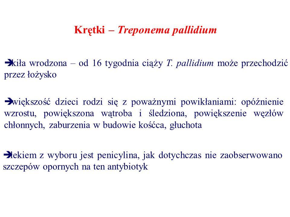 Krętki Treponema Pallidium Ppt Pobierz