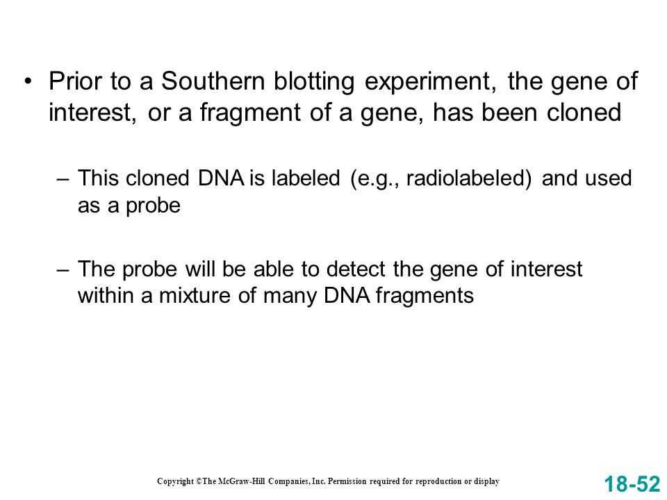 Prior to a Southern blotting experiment, the gene of interest, or a fragment of a gene, has been cloned