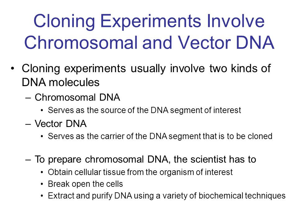 Cloning Experiments Involve Chromosomal and Vector DNA