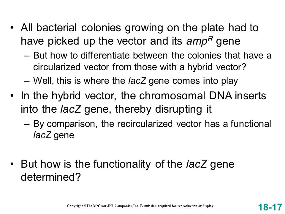 But how is the functionality of the lacZ gene determined