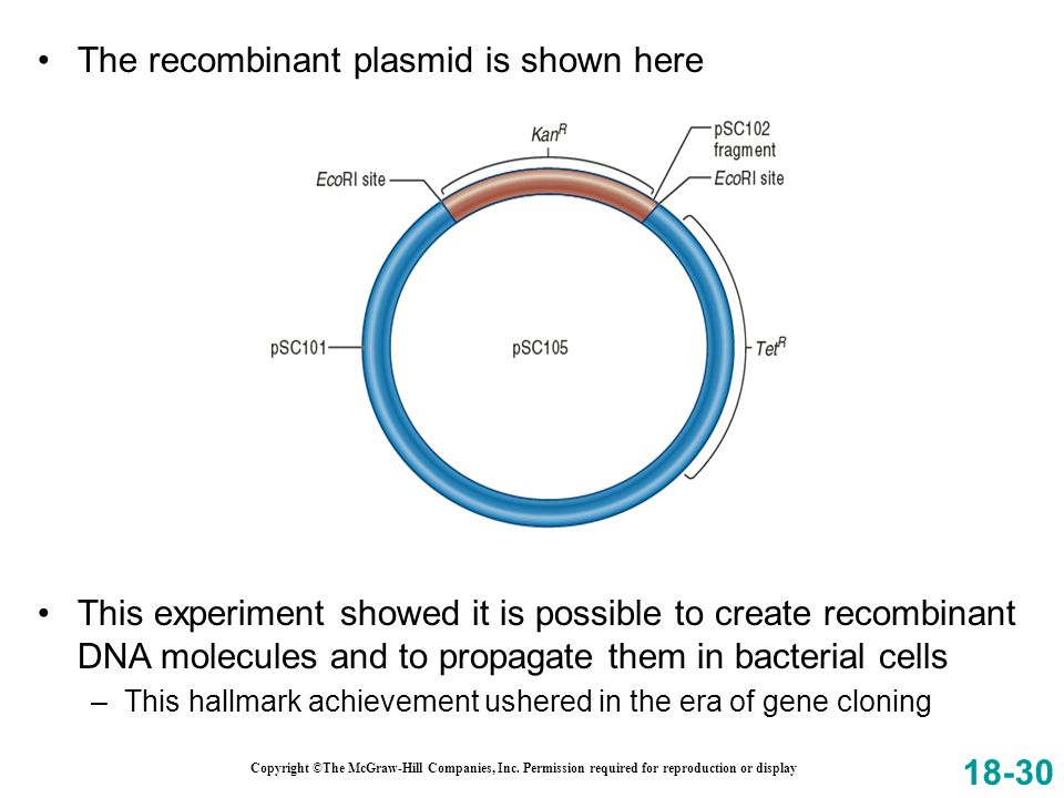 The recombinant plasmid is shown here