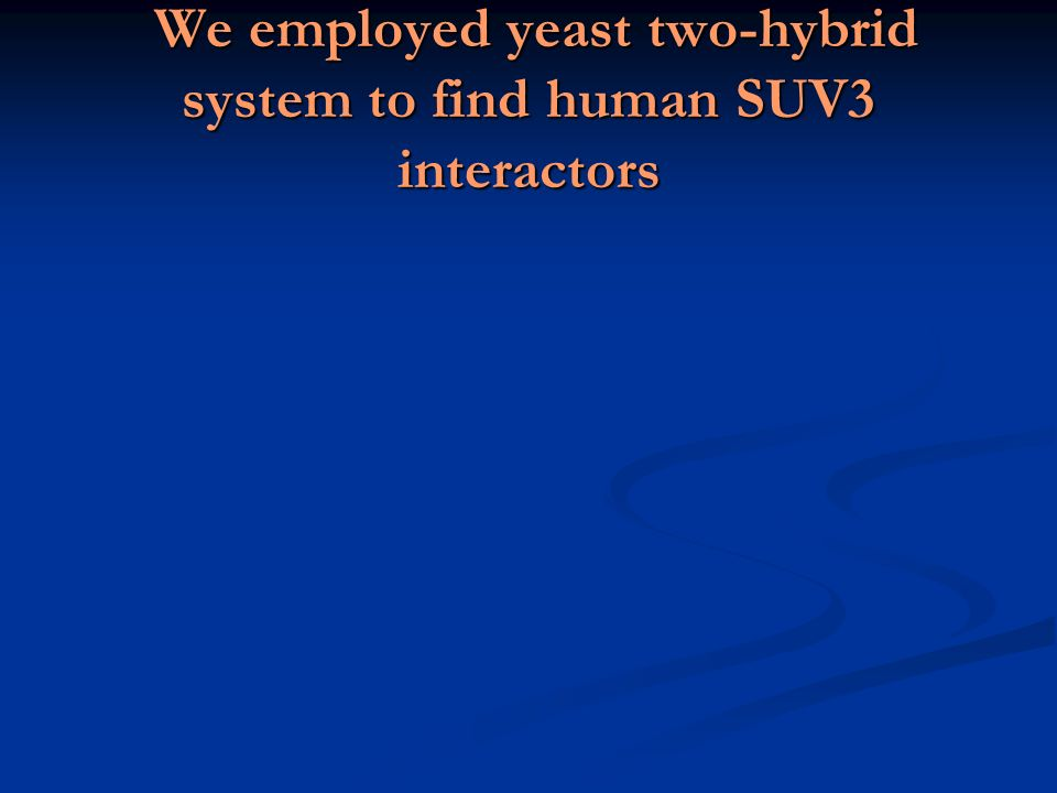 We employed yeast two-hybrid system to find human SUV3 interactors