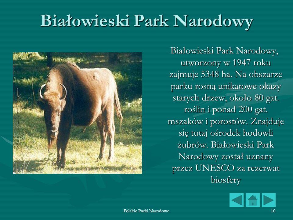 Parki Narodowe W Polsce Ppt Pobierz