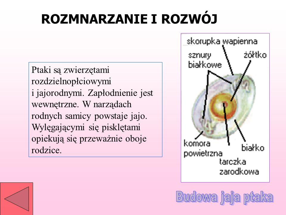 Opracowal Radoslaw Prosowiecki Wraz Z Mateuszem Popinskim Ppt