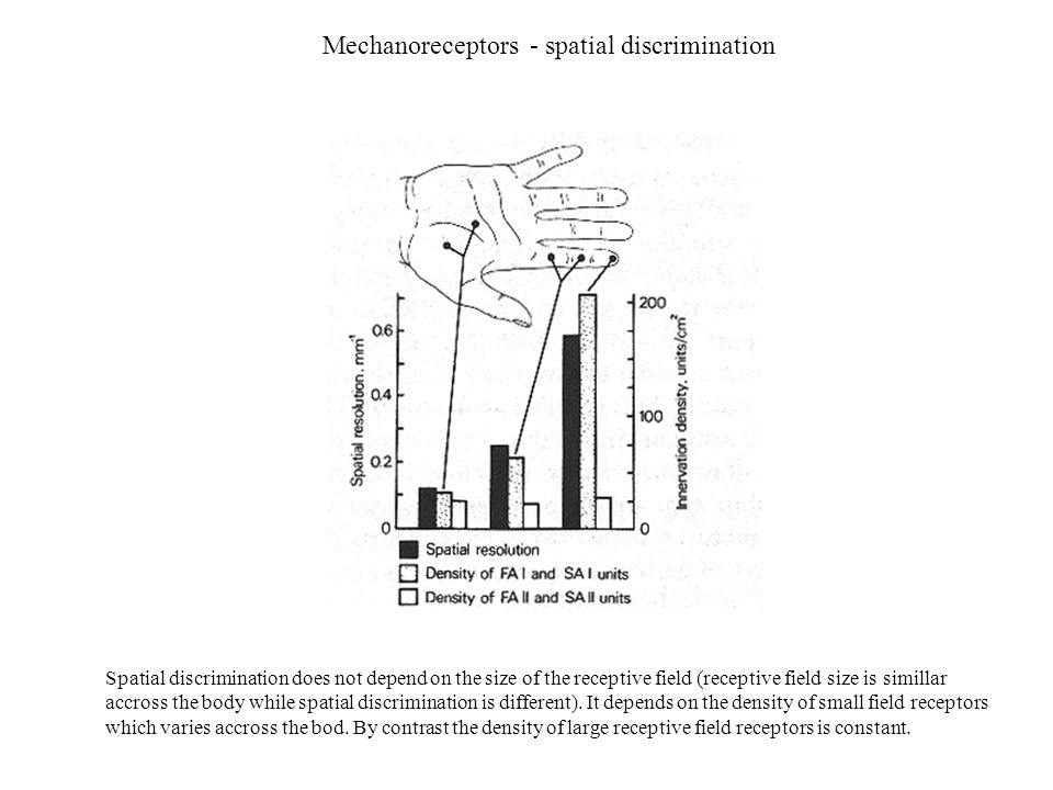 Mechanoreceptors - spatial discrimination