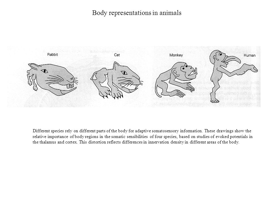Body representations in animals