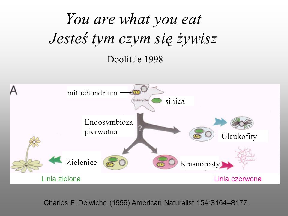 You are what you eat Jesteś tym czym się żywisz Doolittle 1998